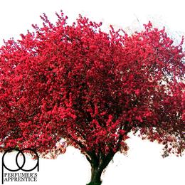 Ароматизатор Red Oak, TPA USA, 1 мл